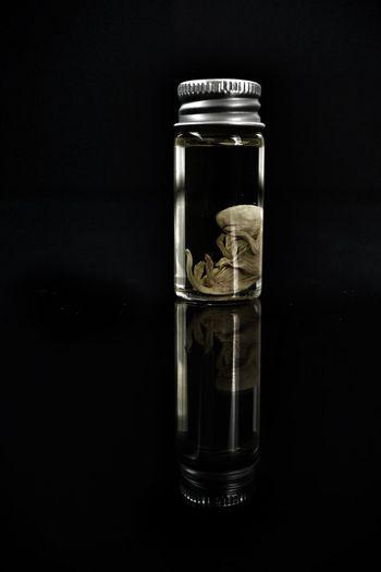 aeturnum.... Light Reflections Specimen Embryo Phial Preservation Glass - Material Transparent Container Black Background Indoors  Jar Still Life Close-up