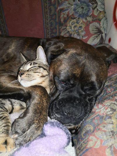Pets Dog Bed