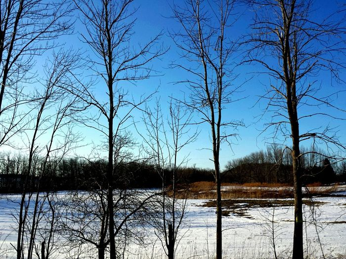 Perhaps it will all melt Snowy Snow ❄ Snow Snow❄⛄ Melting Snow Snow Melting Trees Treescape Winter Trees March 2015