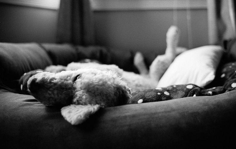 Close-up of dog sleeping on sofa at home