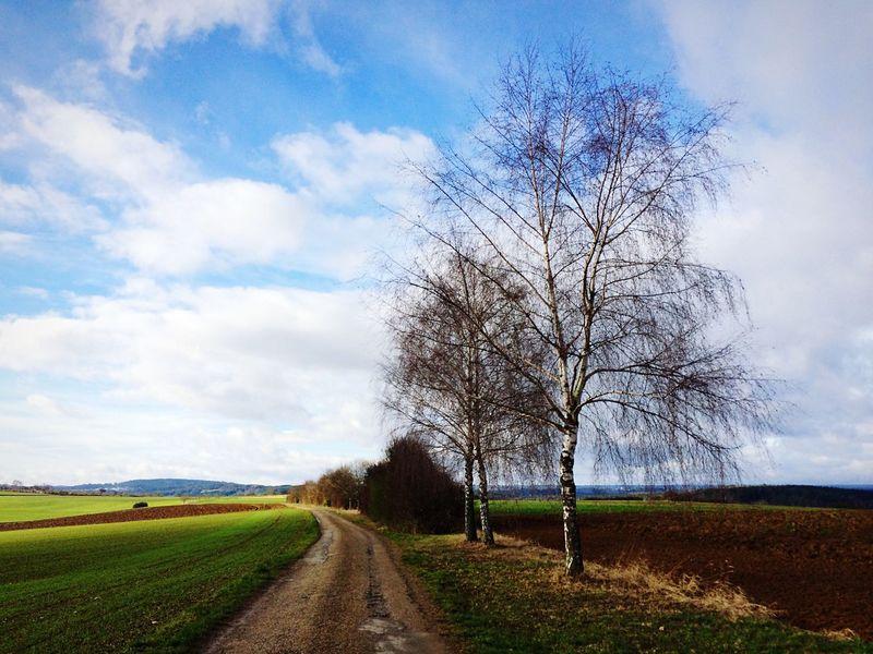 Vanishing Point Landscape Trees Sky Photogra-tree Peace And Quiet Walking Around