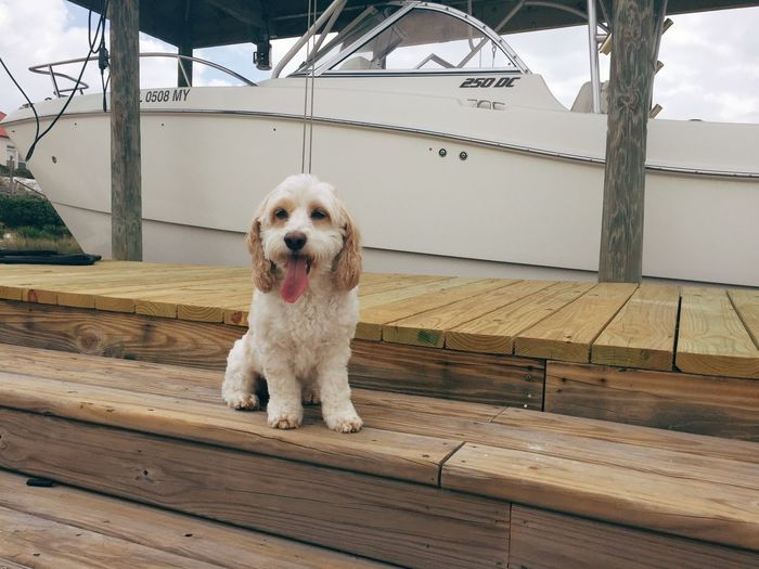 Portrait of dog sitting on wood against sky