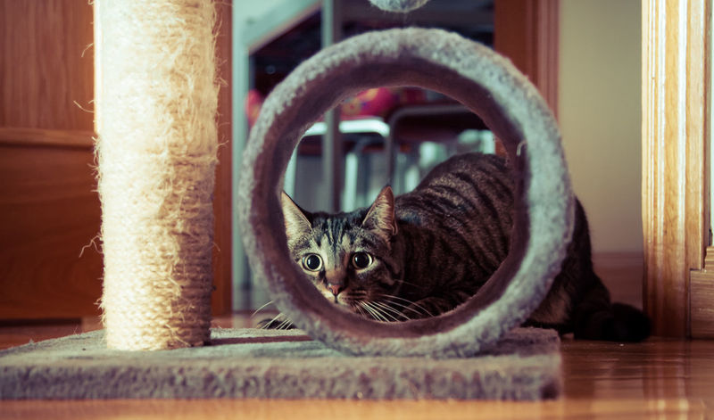 she was expecting my camera to be a mouse Animal Themes Cat Close-up Companion Day Domestic Animals Domestic Cat Feline Hunt Hunting Indoors  Looking At Camera Mammal No People One Animal Pets Playing Games Playing With The Animals Portrait Splittoning Tabby Cat Warm Warmth Wide Eyes