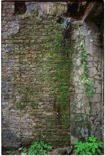 View of weathered wall