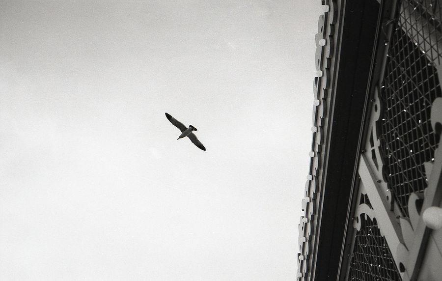 #alone #analog #analogue #blackandwhite #film #film Photography #fly #Korean #Nature  #travel Flying Nature Outdoors Spread Wings Minimalism Minimal