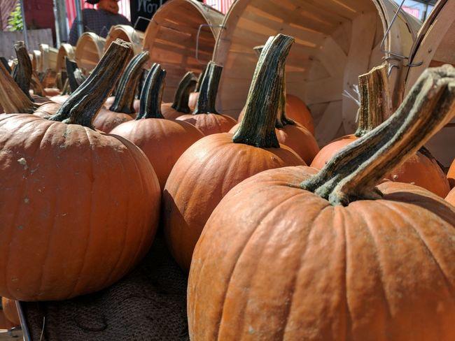 Pumpkins Pumpkin Patch Pumpkin Season Autumn Halloween Farm Harvest Harvest Time Pumpkin Market First Eyeem Photo
