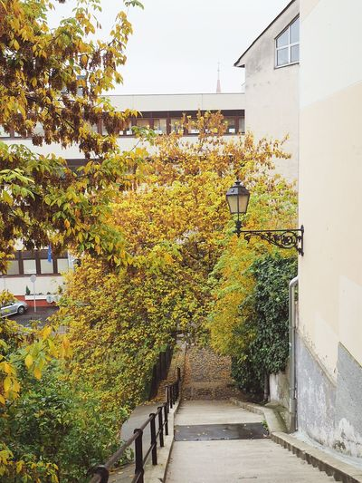 Budapest Vengria Autumn Beauty Leaves Travel Destinations Nature No People Architecture Stairs