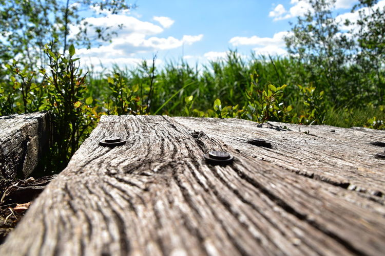Close-up of wood on tree against sky