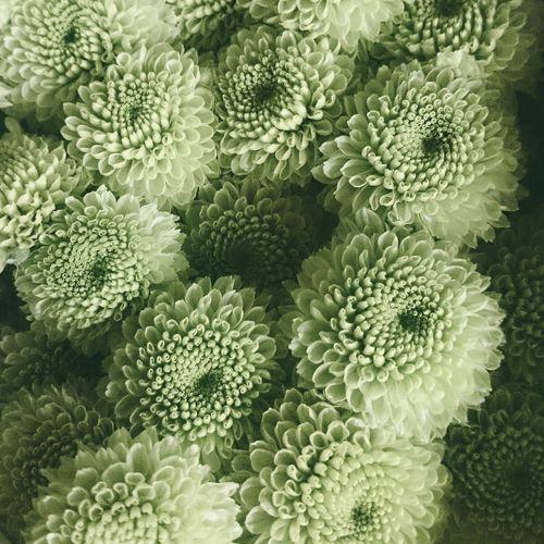 Flowers Green Pastel Pastel Power Mumps Patterns Texture Learn & Shoot: Simplicity