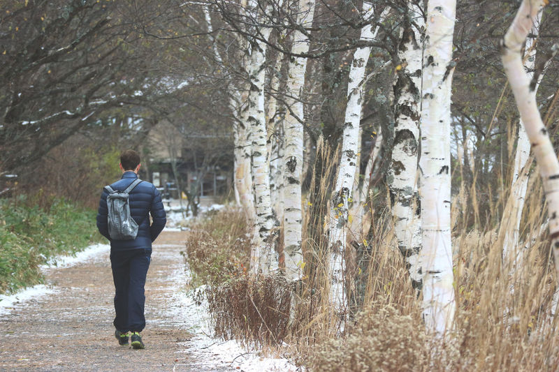 lonely trip man walking among the forest in winter snow season. Trip Day Footpath Forest Full Length Land Men Nature One Person Outdoors Park Plant Real People Rear View Snow Standing Tree Tree Trunk Trunk Walking Way Winter WoodLand