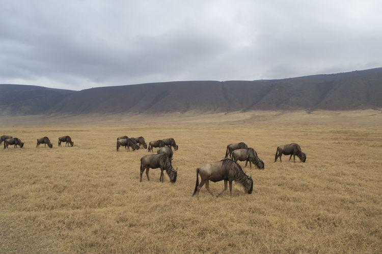 Animals grazing on field