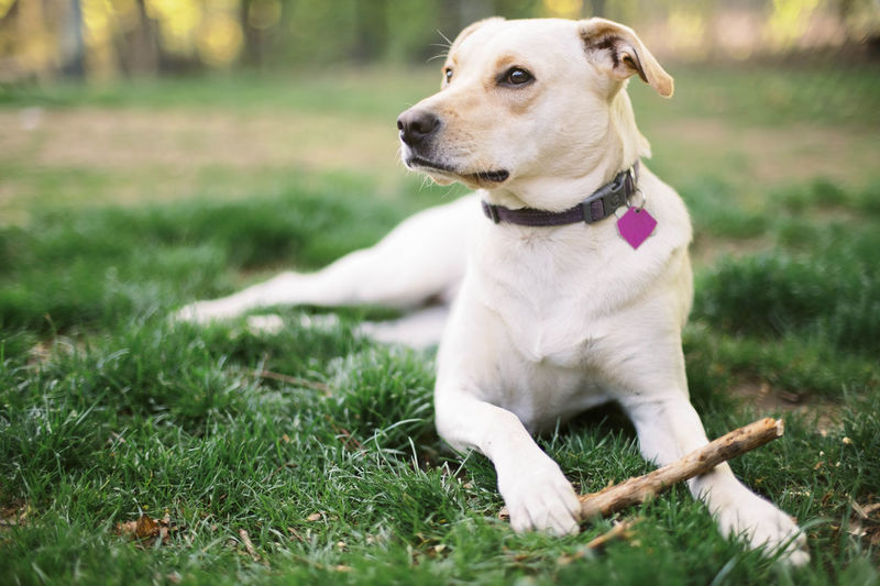 Dog looking away while sitting on grass