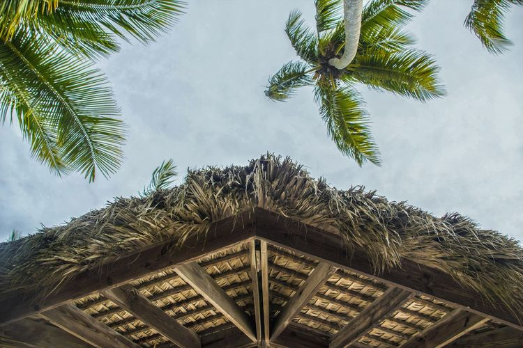 symmetrical paradise Tree Sky Architecture Building Exterior Cloud - Sky Palm Tree Coconut Palm Tree Tropical Tree Tropical Climate Dominican Republic Resort Caribbean Coconut Palm Frond Roof Tile Roof Palm Leaf
