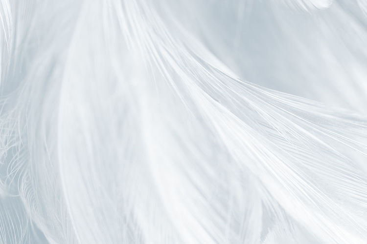 Backgrounds Full Frame White Color Close-up Textile No People Pattern Textured  Abstract Nature Day Indoors  Softness Selective Focus Still Life Linen Sheet Extreme Close-up Plant Abstract Backgrounds Polythene Brightly Lit Veil