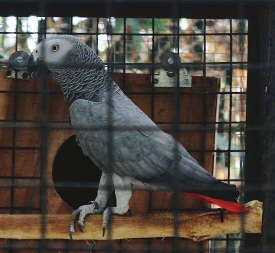 Birdcage Cage
