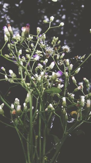Nature Growth Plant Flower Beauty In Nature Green Color No People Close-up Fragility Outdoors Freshness Day Flower Head Blossom Lavender Vintage Photo Beauty In Nature Wildflowers Growth Plant
