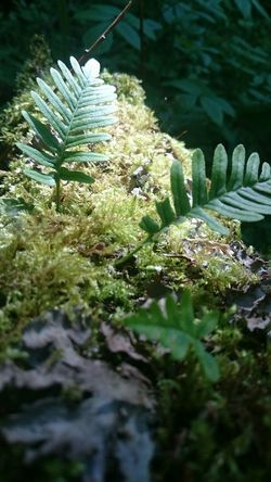 Nature Ferns on old tree