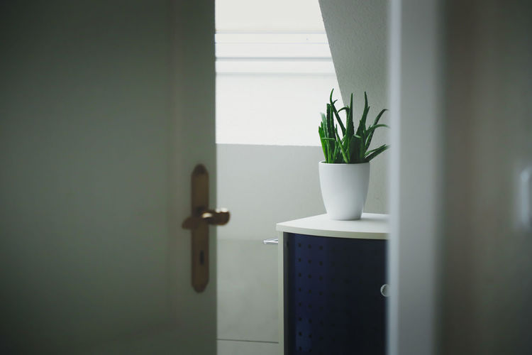 Aloe Aloe Vera Plant Door Furniture Bathroom Potted Plant Plant Growth Leaf Green Color Indoors  Plant Part Nature No People Wall - Building Feature Day Houseplant Close-up Home Interior Decoration Window White Color Entrance Table