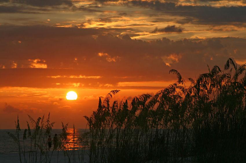 Beauty In Nature Cloud Cloud - Sky Madeira Beach Florida Nature Orange Color Outdoors Saint Petersburg Florida Scenics Seaoats Sky Sun Sunset Tampa Bay Tranquil Scene Tranquility