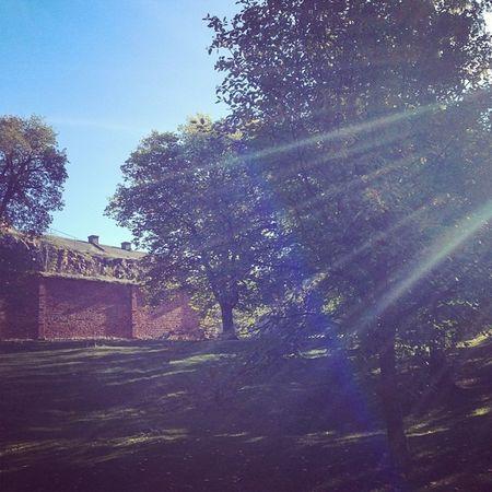 Solens sista strålar. Uppsalaslott Uppsalacastle Slott Castle castles uppsala tiundaland uppland sverige sweden höst autumn picoftheday tagsforlikes instacastle instacastles instaautumn