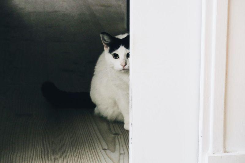 Home Looking At Camera Animal Animal Themes Cat Domestic Animals Domestic Cat Door Feline Home Interior Indoors  Mammal Minimalism Porttrait Shy Cat
