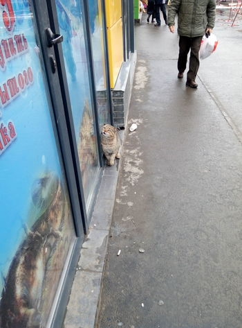 Hungry cat on the market. Later i bought fishes and fed him one Homeless Cat Cat♡ Hungry Cat No Fish No Fish Today Market Marknad Kharkiv Geroiv Pratsi