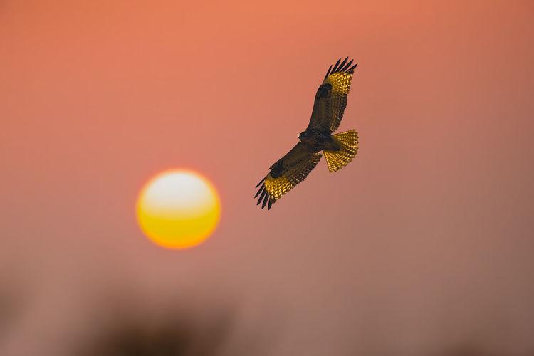 夕下之舞 Bird Bird
