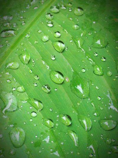 Full frame shot of water drops on leaf