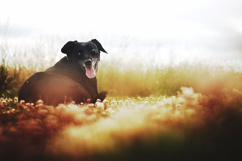 Surface level view of dog resting on grassy field