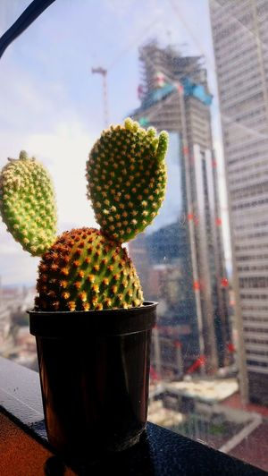Close-up of succulent plant on table in city