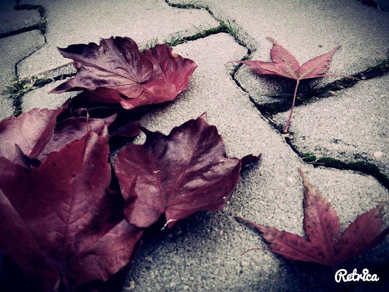 Autumn Leaves Autumn Red Leaves Autumn Colors Letsgoback