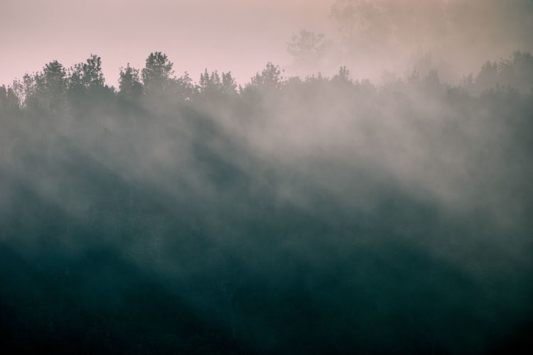 Morning silhouettes... EyeEmNewHere Silhouette Sunlight Backgrounds Beauty In Nature Cloud - Sky Environment Fog Foggy Morning Forest Landscape Morning Nature No People Non-urban Scene Outdoors Plant Scenics Scenics - Nature Sky Smog Tranquil Scene Tranquility Tree Twilight