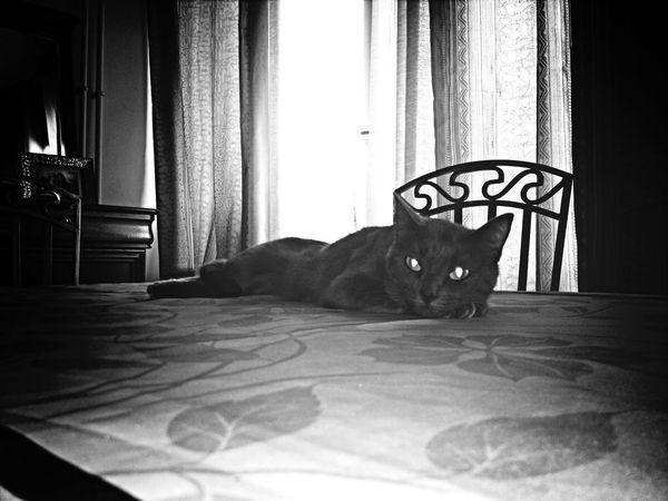 My Cat Bibouche Sur La Table ??