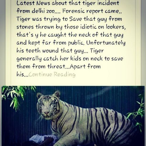 Really I m not bad Trustme Try to save guy from stone!!awesome tiger