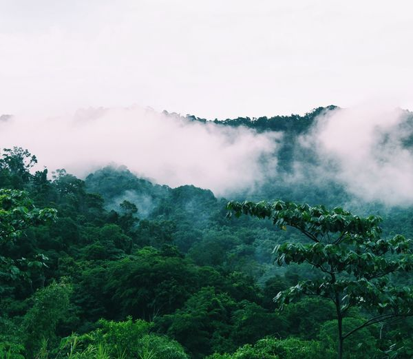 Scenic view of foggy mountain against sky