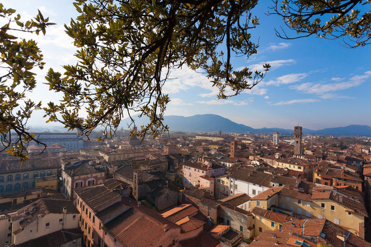 Aerial view of Lucca, Italy Architecture Building Exterior Built Structure City Building Residential District Cityscape Sky High Angle View Crowded Crowd Nature Roof Day Outdoors TOWNSCAPE Lucca Tuscany Toscana City Cityscape Aerial View View Top Lucca Italy