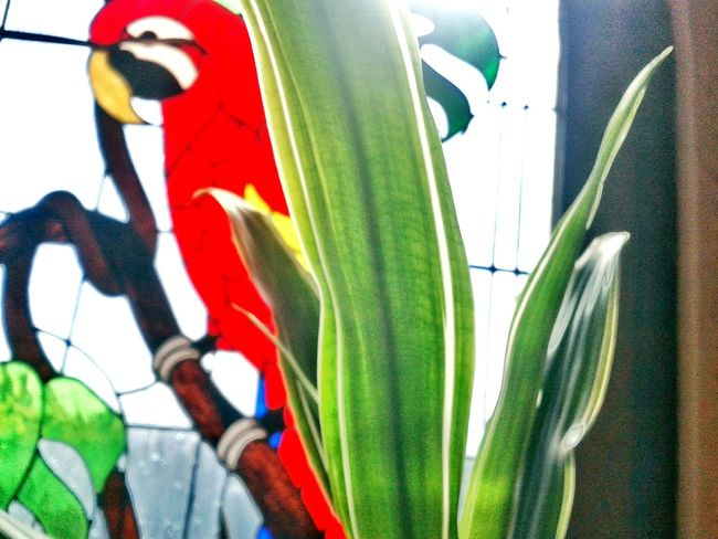 Fotografia Luz Hoteldelangel Hi! Taking Photos Naturaleza Flores Tlaxcala EyeEm Nature Lover Mexico