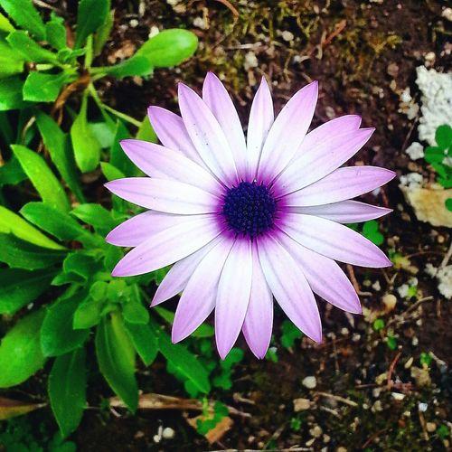 Secret Garden 🌷 Flowers 🌹 Plants And Flowers Flower Daisy💜 Green Brown Purple Purple Flower
