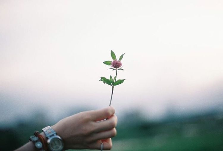 Human Hand Human Body Part Flower People Nature Day Close-up Japan Film Film Photography Film Camera