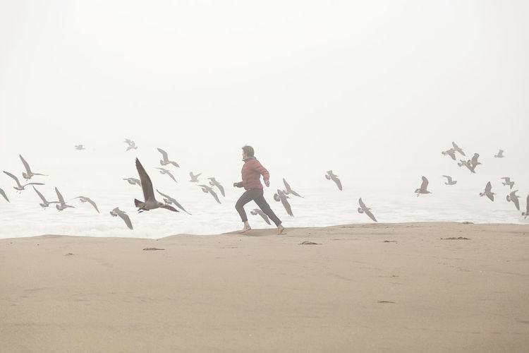 Foggy day at Tunitas Creek. Land Beach Animal Wildlife Sea Sand Sky Water Bird People Flock Of Birds Running Ocean Pacific