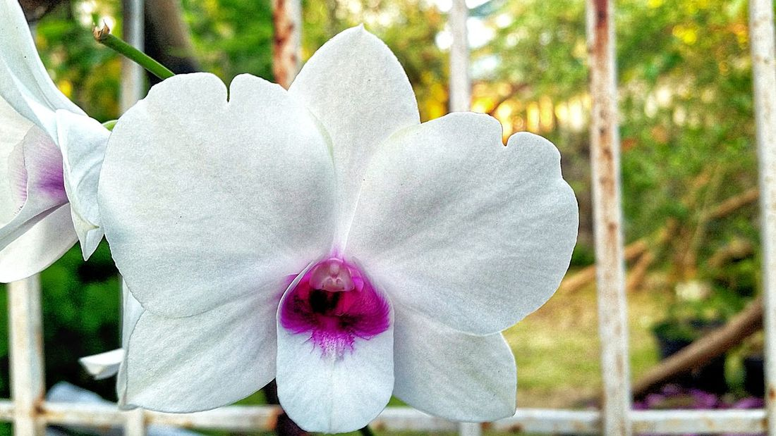 Close-up Orchid Flower Petal Beauty In Nature Nature Day Fragility Flower Head