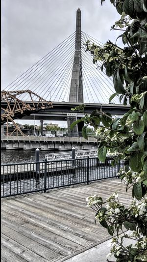 Zakim Leonard Zakim Bridge Leonard Zakkim Bridge Boston Charles River Spring In New England Peace