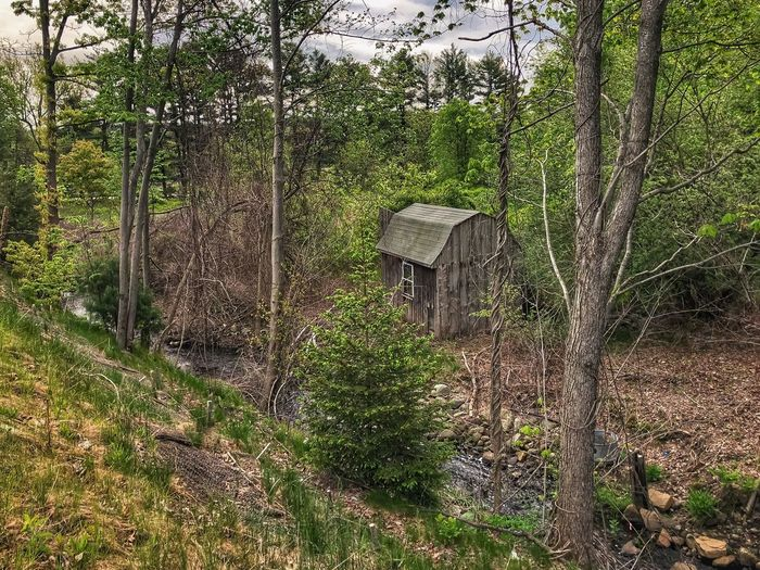 Wooden Shed in the Wilderness Plant No People Growth Full Frame Day Nature Pattern Green Color Tree Outdoors Beauty In Nature Built Structure Tranquility Architecture Textured  Moss Backgrounds