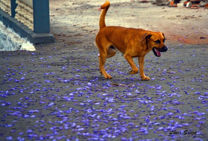 Dog and flowers.