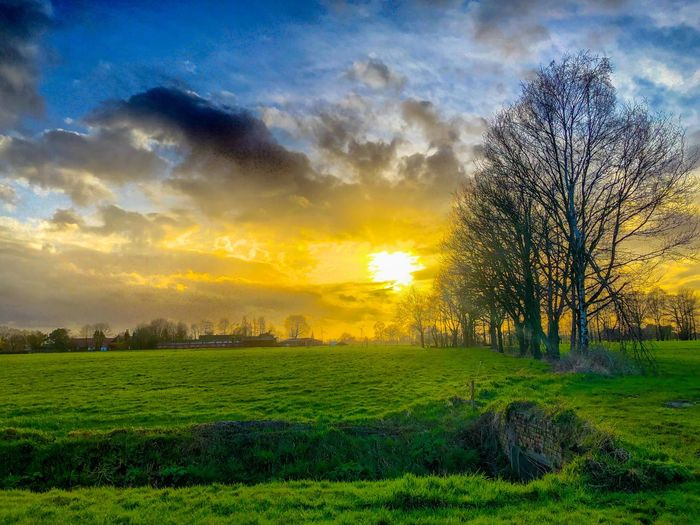 Golden sunset under a blue sky with some dark clouds and over a soft fresh green grass landscape with some still bare trees at the end of wintertime Sky Sunset Beauty In Nature Plant Cloud - Sky Scenics - Nature Tranquility Tranquil Scene Tree Landscape Growth Field Environment Land No People Nature Idyllic Green Color Grass Sun