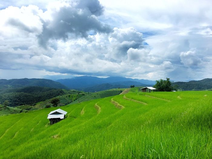Nature is calling Field Nature Tranquil Scene Landscape Beauty In Nature Agriculture Mountain Scenics Cloud - Sky Tranquility Sky Grass Growth Green Color No People Crop  Rural Scene Outdoors Day Rice Paddy Chiang Mai | Thailand Phabongpiang