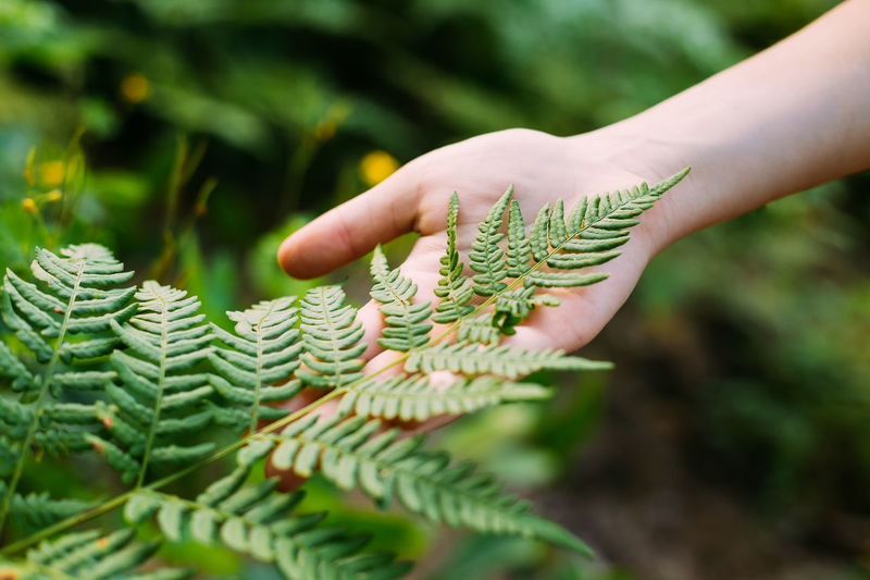 Close-Up Of Hand Touching Fern Leaves