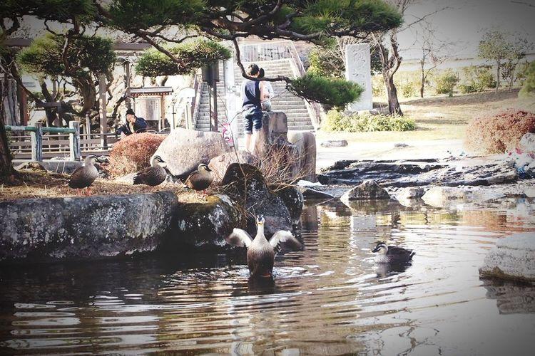 Japan 日本 かも 瞬間 一瞬 鴨