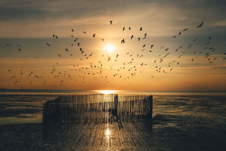 Sunset Sky Animal Sunset Large Group Of Animals Group Of Animals Animal Themes Bird Vertebrate Water Flying Sea Animal Wildlife Scenics - Nature Animals In The Wild Beauty In Nature Flock Of Birds Horizon Over Water Nature Cloud - Sky No People Sun Outdoors Wooden Post