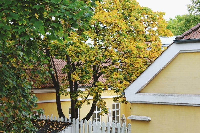 I Love My City Street Streetphotography Autumn Fall Denmark House
